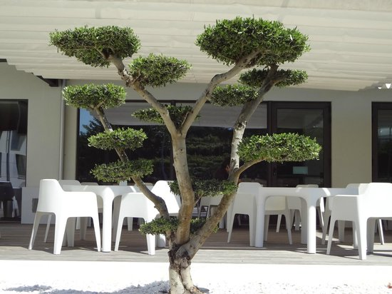 INATEL Cerveira Hotel : A different tree