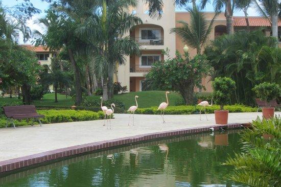 Iberostar Hacienda Dominicus : .