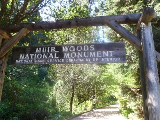 Bohemian Grove Picture Of Muir Woods National Monument