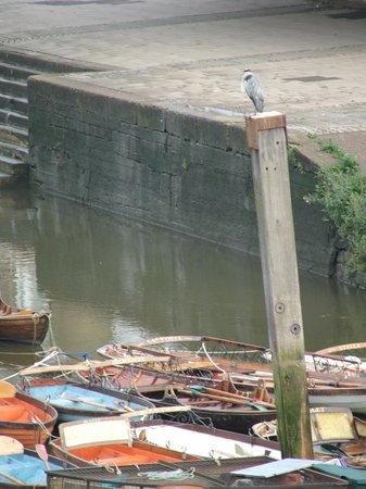 Richmond-upon-Thames, UK: Heron supervising the boats at Richmond