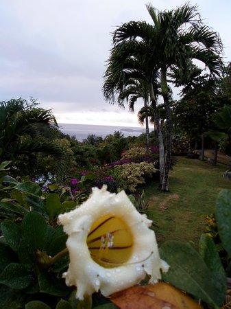 La Koumbala: il giardino di Isabel