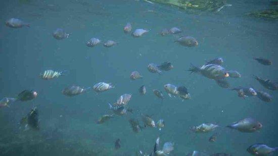 Yapak Beach (Puka Shell Beach): snorkeling