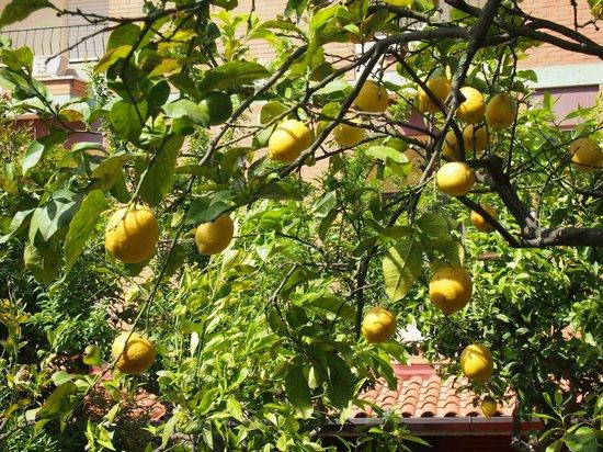 Hotel Casa Yvorio: Limoni..... che bontà!!!