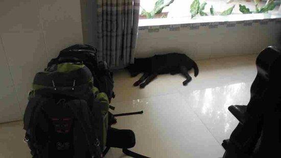 """Nhat Lan : DOG ! """""""