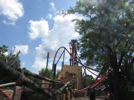 Busch Gardens : SHEIKRA con caída de casi 90º
