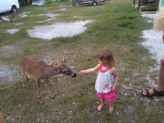 Kiki's Sandbar: Come see the key deer!