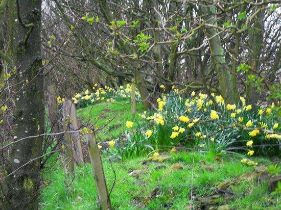 Hauxley Wildlife Discovery Centre - Northumberland Wildlife Trust: Beautiful scenery