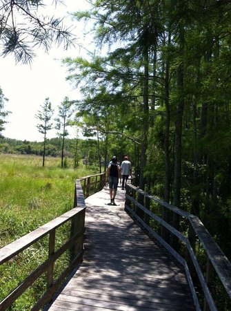 Corkscrew Swamp Sanctuary : Awesome path
