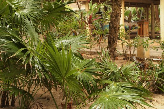 Hobbies Hideaway: luscious bushes and palms around the property
