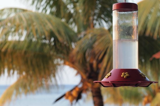 Hobbies Hideaway: humming bird feeder