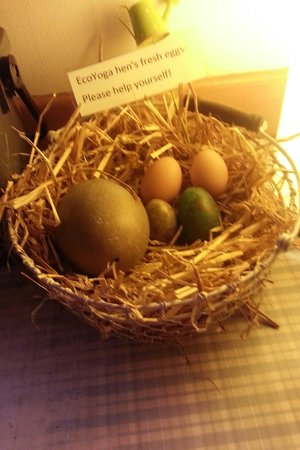 EcoYoga Centre: Beinh vegan don't get eggs often.so getting these cruelty free eggs fresh every morning from the