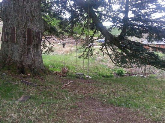 EcoYoga Centre: Tree swing- memories