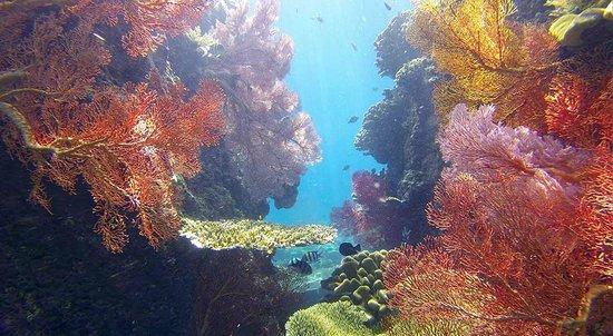 Pondok Vienna Beach: Juste en face de notre chambre, un vrai paradis pour nos yeux. Ici des gorgones.