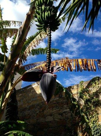 Il Giardino di Ballaro: bananier dans le patio