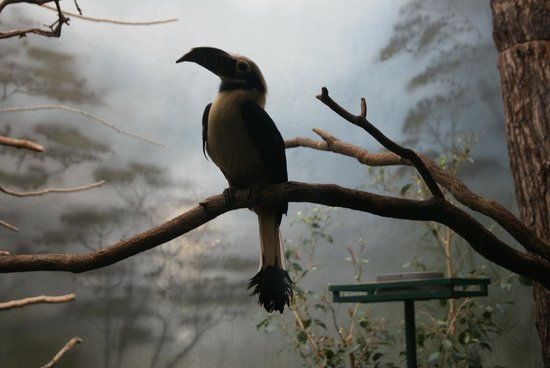 Zoologischer Garten Frankfurt/Main: At the bird sanctuary