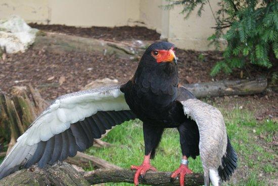 Frankfurt Zoo (Zoologischer Garten Frankfurt/Main) : Another bird