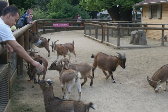 Frankfurt Zoo (Zoologischer Garten Frankfurt/Main) : Pet corner