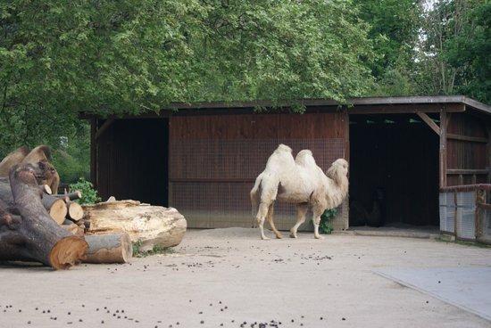 Frankfurt Zoo (Zoologischer Garten Frankfurt/Main): we almost missed them