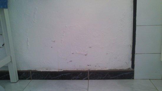 Bahia Blanca : Mold on the wall