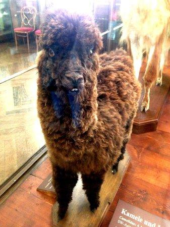 Muséum d'histoire naturelle de Vienne : Dentoni!!