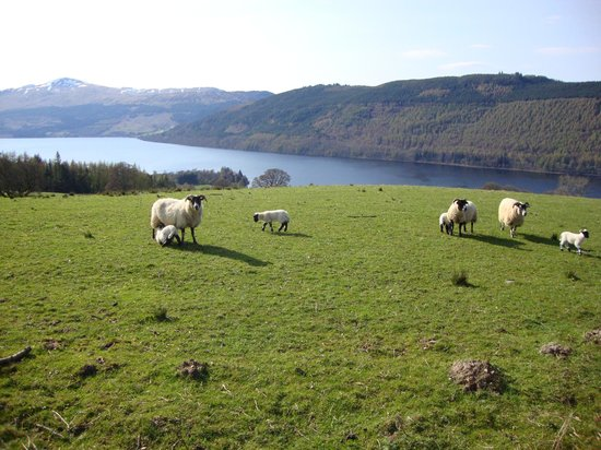 Mains of Taymouth Cottages : View from Queens Drive