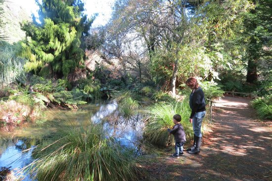Buried Village of Te Wairoa: By the stream