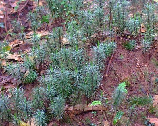 Eastern Taranaki Experience: World's tallest moss - Whanganui National Park