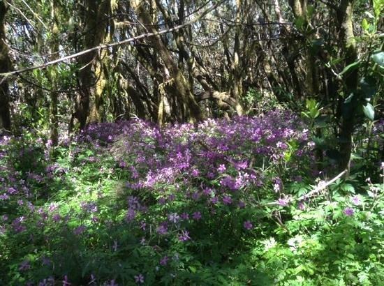 Garajonay National Park: jolie forêt fleurie