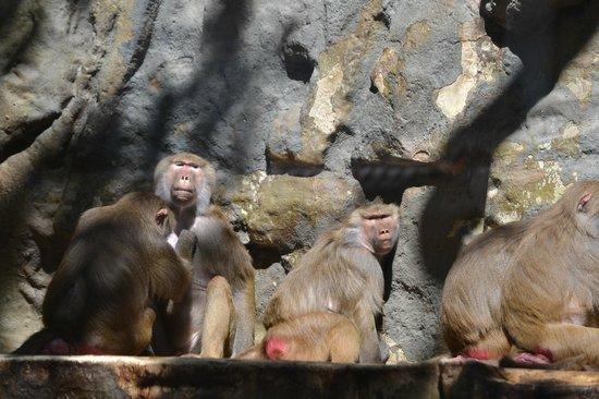 Antwerp Zoo (Dierentuin): Zoo van Antwerpen