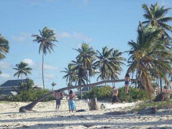 Barcelo Punta Cana : пляж