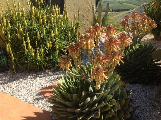 Mapua Hills Bed & Breakfast: magically Mediterranean- stunning cacti