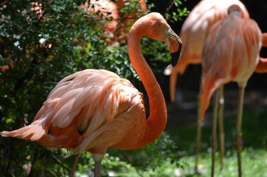 Antwerp Zoo (Dierentuin) : Zoo van Antwerpen