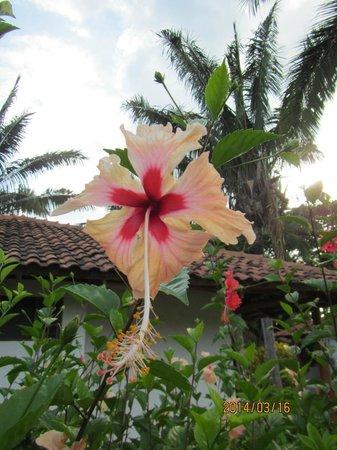 Hotel Villas Playa Samara: In front of our Garden Villa