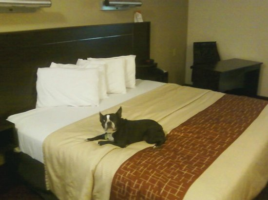 Red Roof Inn Lafayette: King Size Bed
