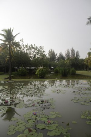 The Sarojin : Ficus restaurant and the Lotus pond