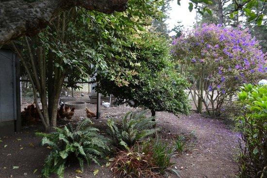 Glendeven Inn Mendocino : chickens!