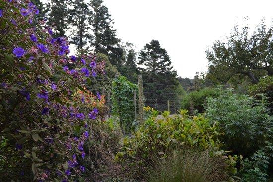 Glendeven Inn Mendocino : so beautiful