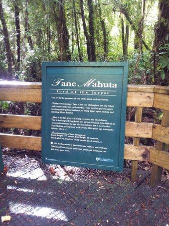 Footprints Waipoua: The explanation..