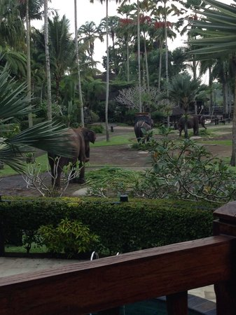 Elephant Safari Park & Lodge : Walking through the park