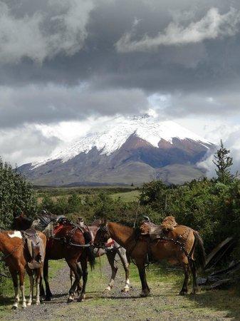 Hacienda Los Mortiños: Cotopaxi