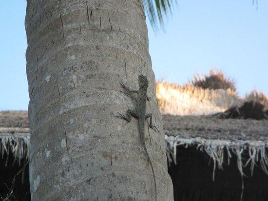 Adaaran Club Rannalhi : Island animal