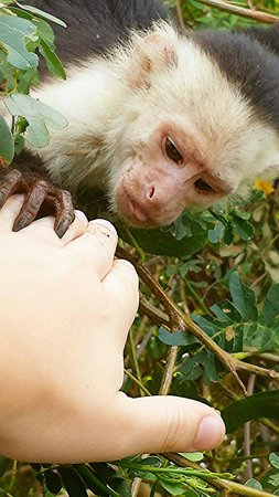 Costa Rica Private Tours: 4-24-14 GREATEST DAY OF MY LIFE