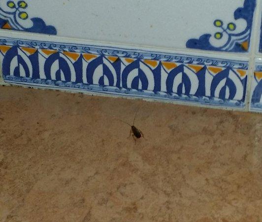 El Conquistador Resort, A Waldorf Astoria Resort: Roaches in the bathrooms