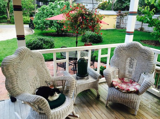 The Laurel Oak Inn: Friendly cat on the porch