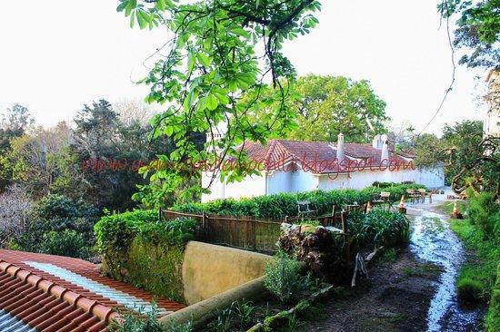 Almaa Sintra Hostel: O imenso verde da área externa
