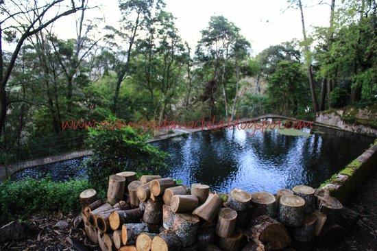 Almaa Sintra Hostel: O imenso verde da área externa com a piscina