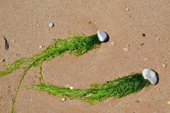 Riserva Naturale del Fiume Irminio: sassi con la coda
