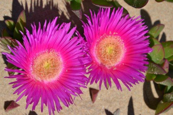 Riserva Naturale del Fiume Irminio: fiori