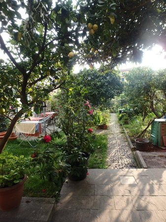 A Durmi: lemon tree  and camelia by our room