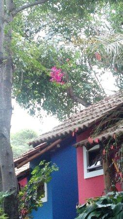 Mirante De Lencois: Flora